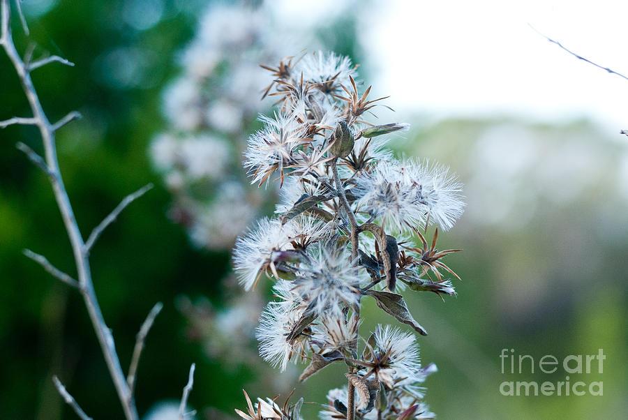 Autumn Photograph - Transition 2 by Barbara Shallue