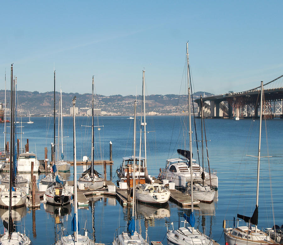 Treasure Island Marina Photograph  - Treasure Island Marina Fine Art Print