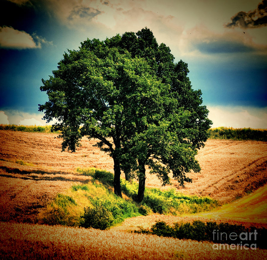 Tree Alone Photograph