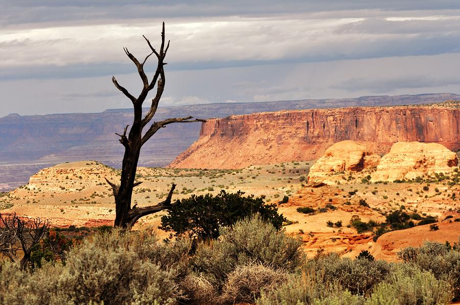 Tree And Mesa Photograph  - Tree And Mesa Fine Art Print