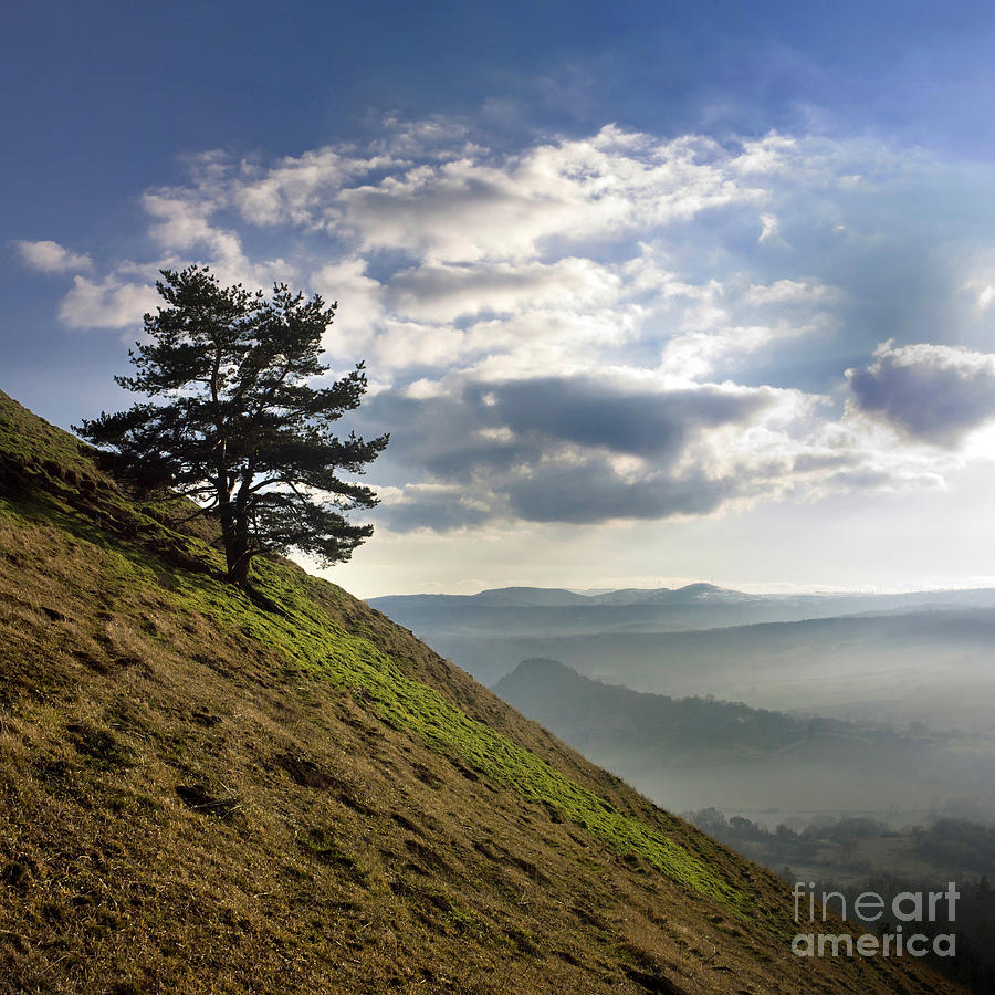 Tree And Misty Landscape Photograph