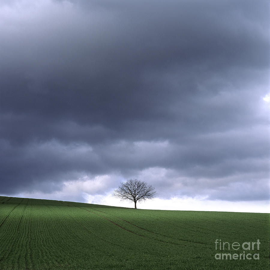 Tree And Stormy Sky  Photograph