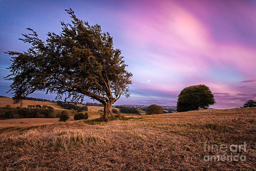 Tree At Sunset Photograph  - Tree At Sunset Fine Art Print