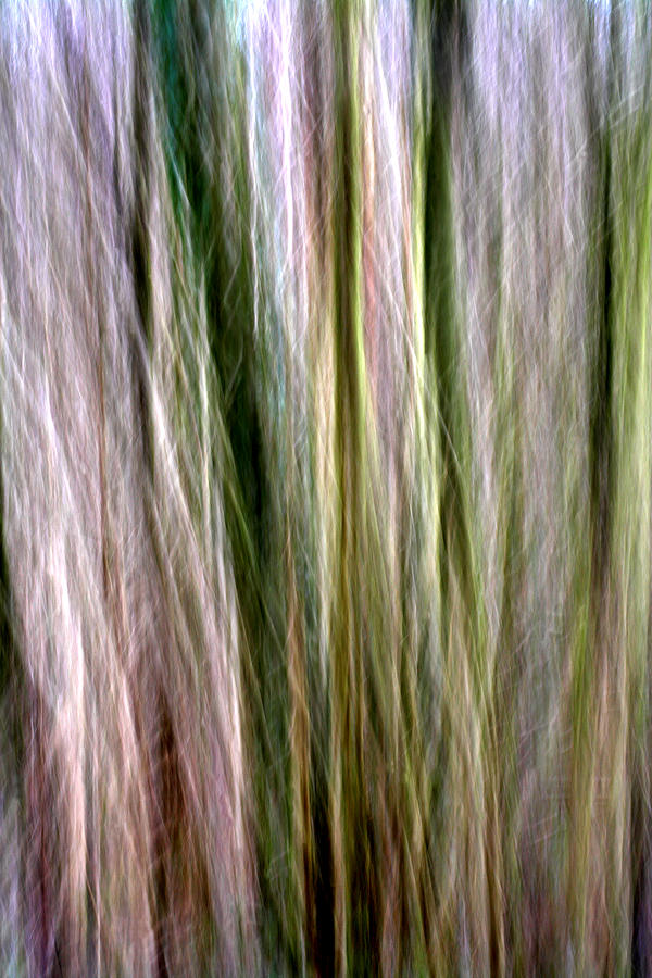 Tree Boughs Abstract II Photograph