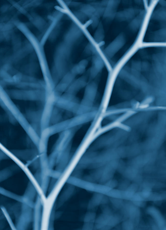 Tree Branches Abstract Cobalt Blue Photograph