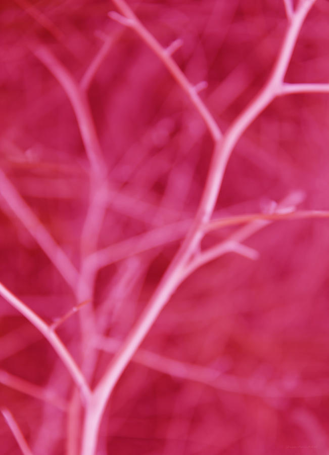 Tree Branches Abstract Hot Pink Photograph