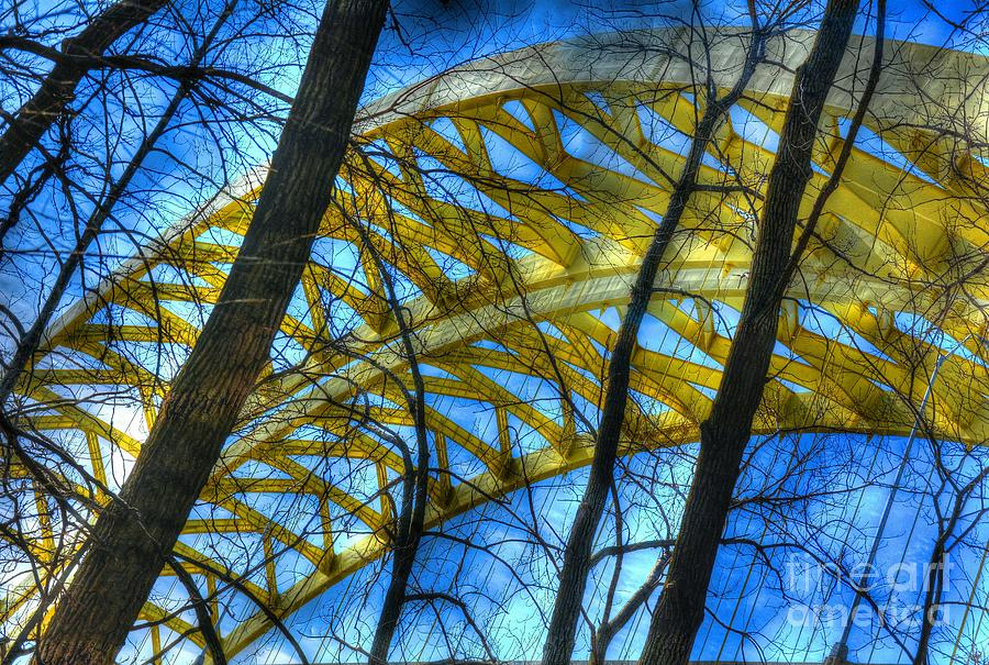 Tree Bridge Designs Photograph  - Tree Bridge Designs Fine Art Print