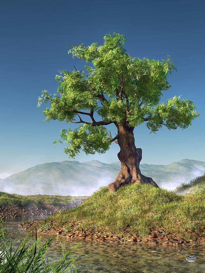 Tree Digital Art