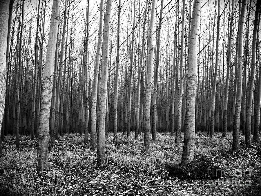 Tree Farm Photograph - Tree Farm by Chalet Roome-Rigdon