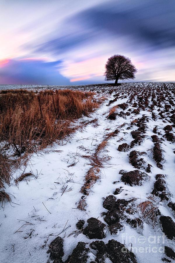 Snow Photograph - Tree In A Field  by John Farnan