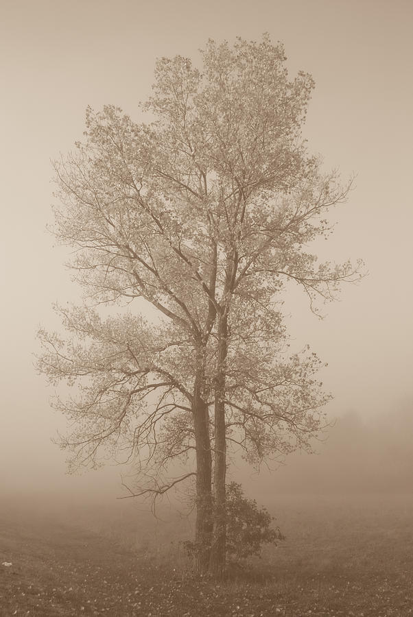Tree In Morning Fog Photograph
