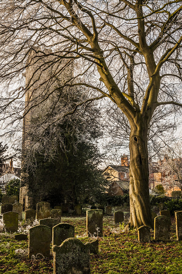 Tree In St Mary Magdalens Church Yard Photograph