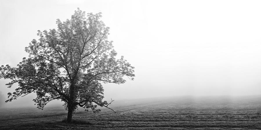 Tree Photograph - Tree In The Fog by Andrew Soundarajan