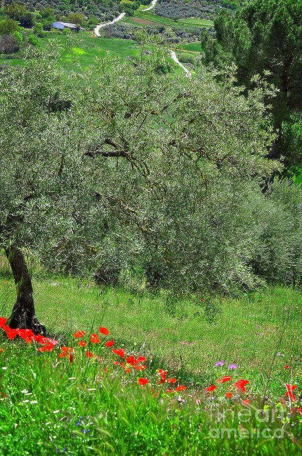 Tree In The Meadow Near Ronda  Photograph