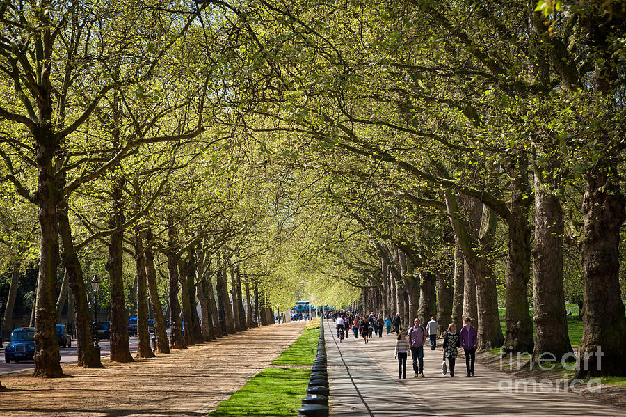 Tree lined path and bridle path at constitution hill london by peter