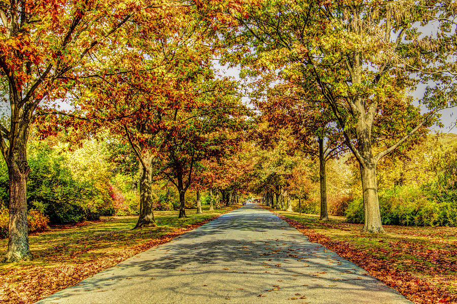 Tree lined path in ringwood new jersey is a photograph by geraldine