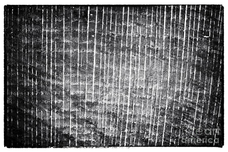 Tree Lines Photograph