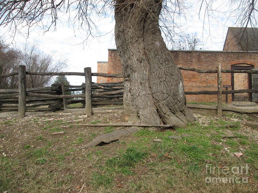 Tree Near The Gaol Photograph