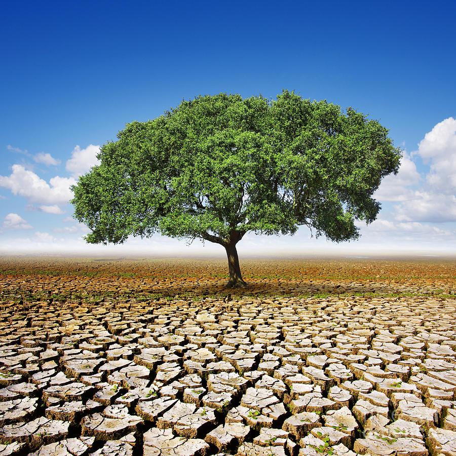 Tree On Dry Land Photograph By Carlos Caetano