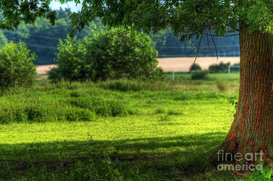 Tree On Summer Field Photograph