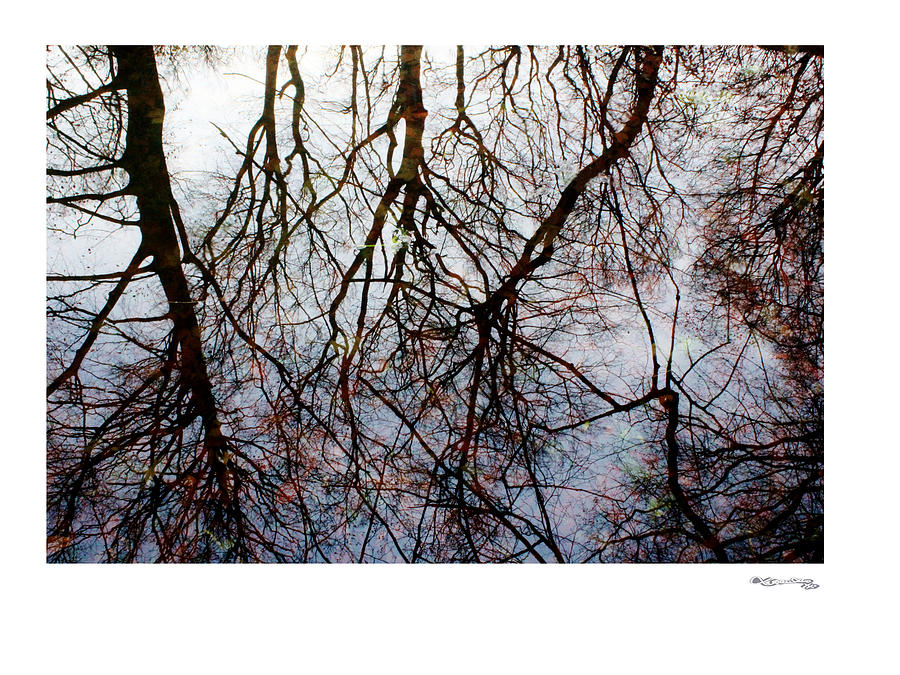 Tree Reflections On Tranquil Waters Photograph  - Tree Reflections On Tranquil Waters Fine Art Print