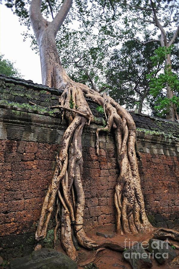 Tree Photograph - Tree Roots On Ruins At Angkor Wat by Sami Sarkis