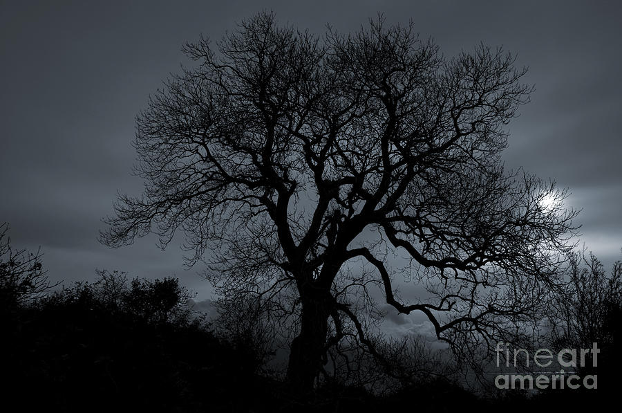 Tree Silhouette Photograph  - Tree Silhouette Fine Art Print