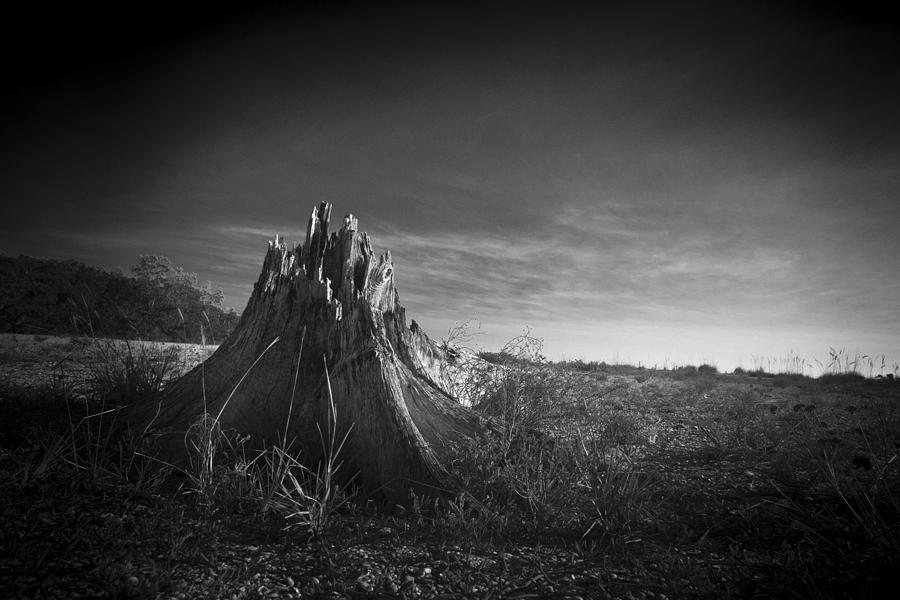 Tree Stump In Lovers Key Photograph