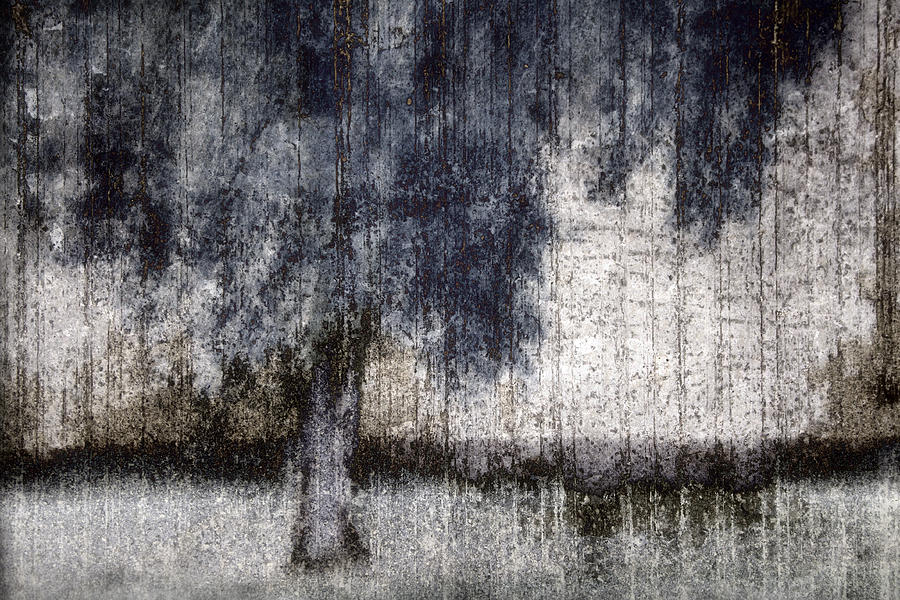 Tree Through Sheer Curtains Photograph