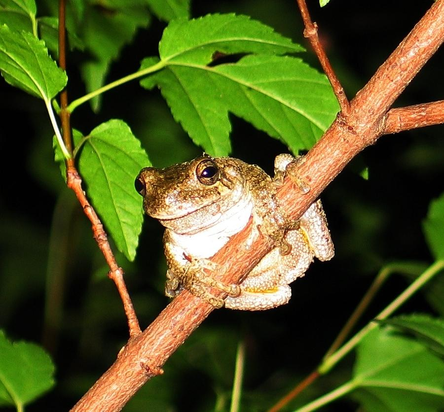 Tree Toad Night Photograph