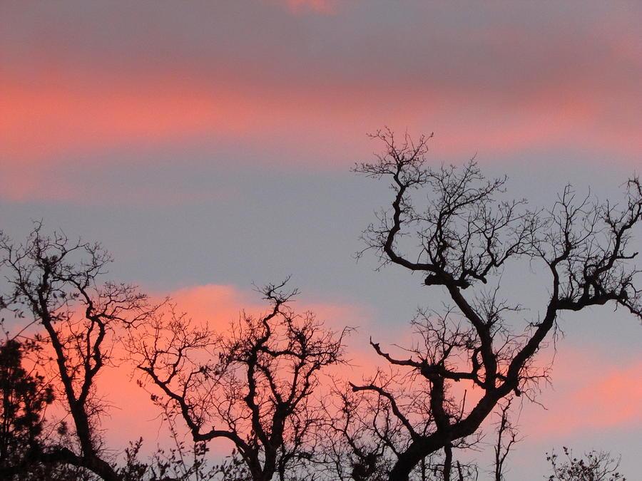 Tree Tops  Photograph