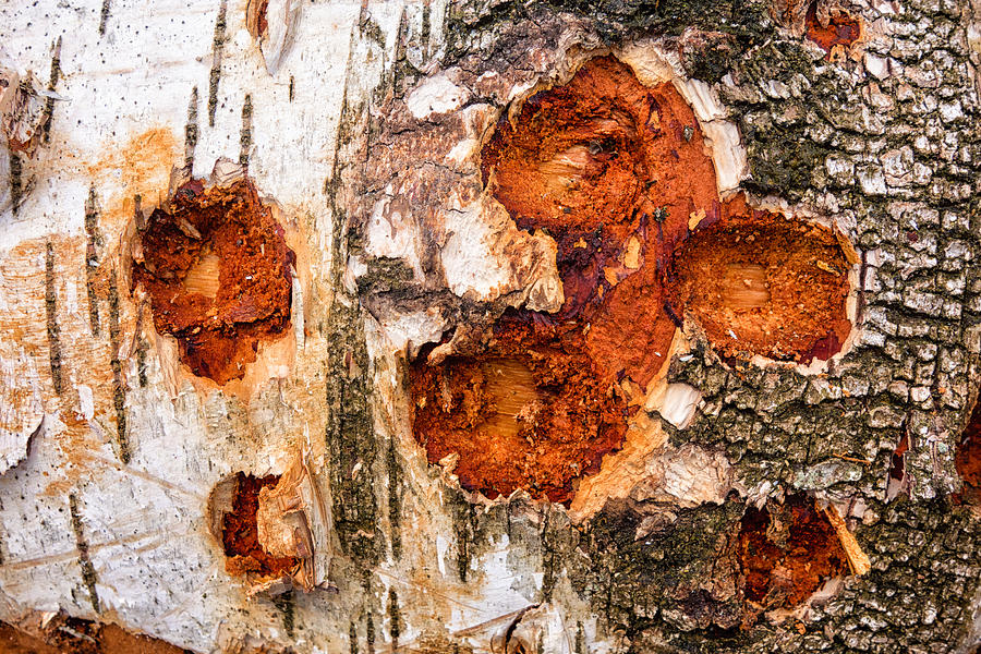 Tree Trunk Closeup - Wooden Structure Photograph