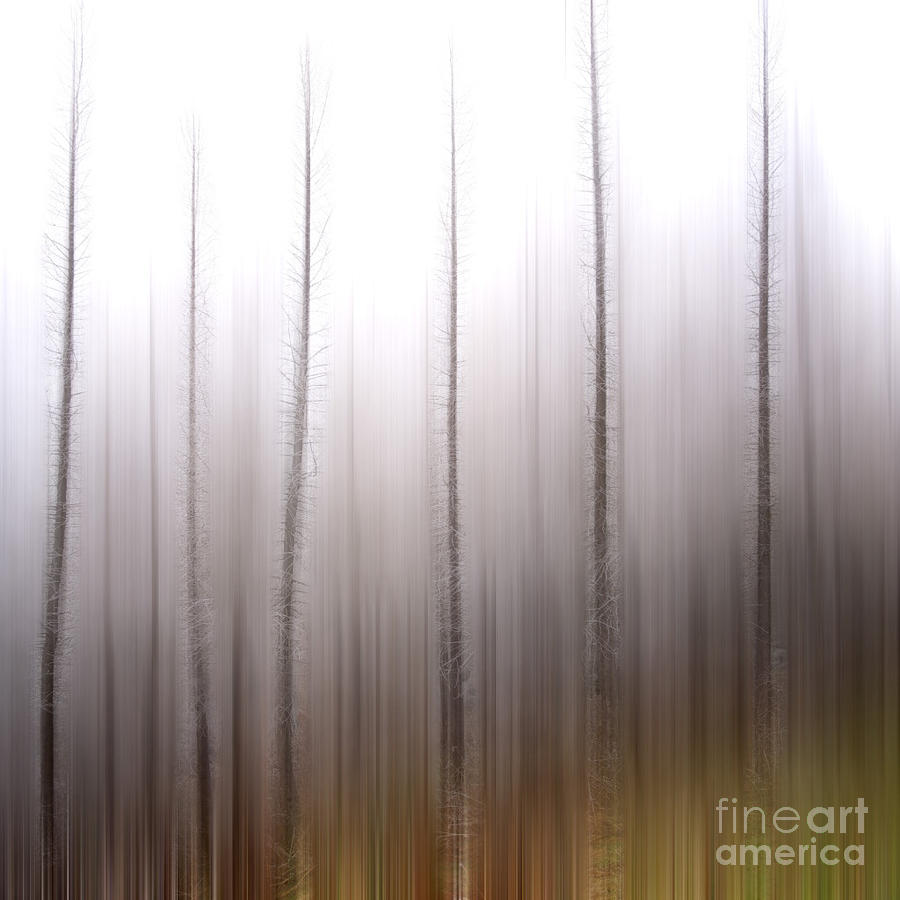 Tree Trunks Photograph  - Tree Trunks Fine Art Print