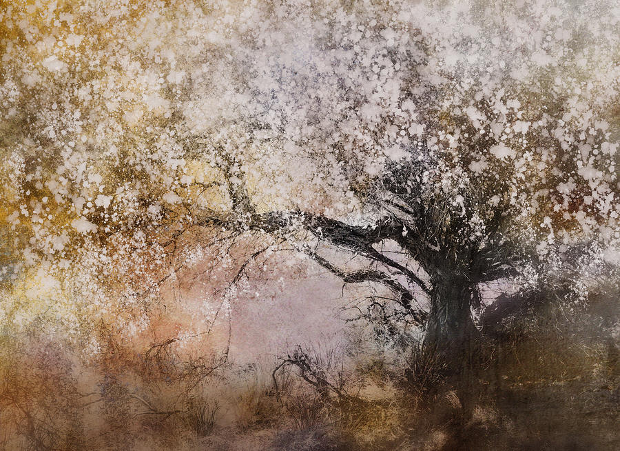 Tree Whispers Photograph  - Tree Whispers Fine Art Print