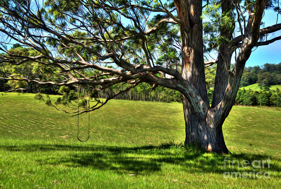 Tree With A Swing Photograph  - Tree With A Swing Fine Art Print