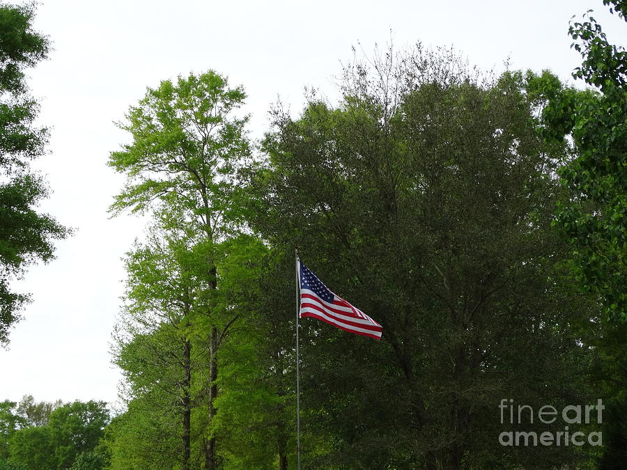 Trees And Flag Photograph
