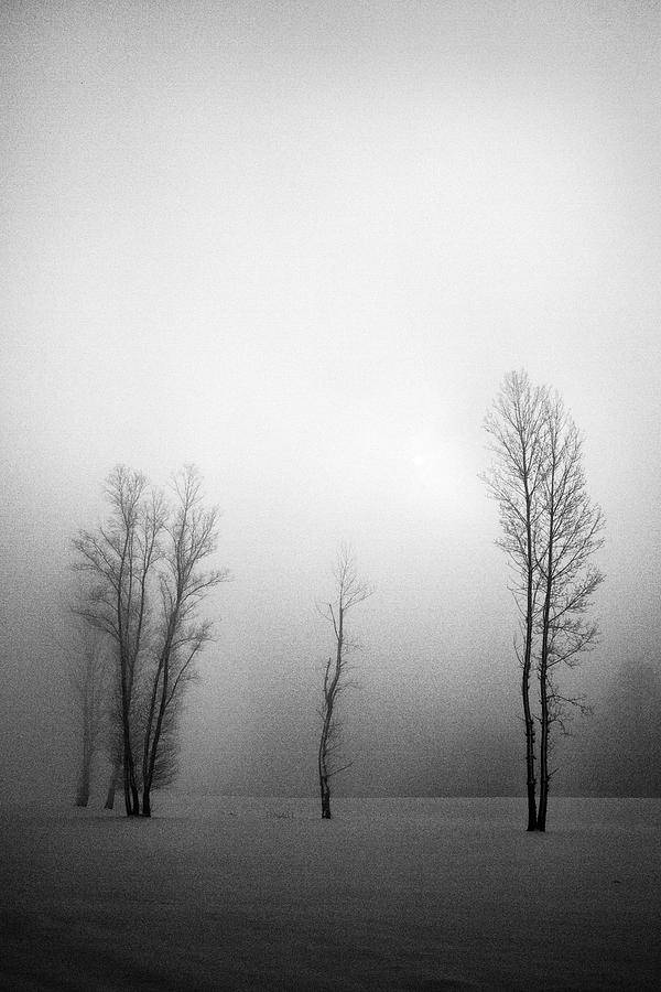 Trees In Mist Photograph