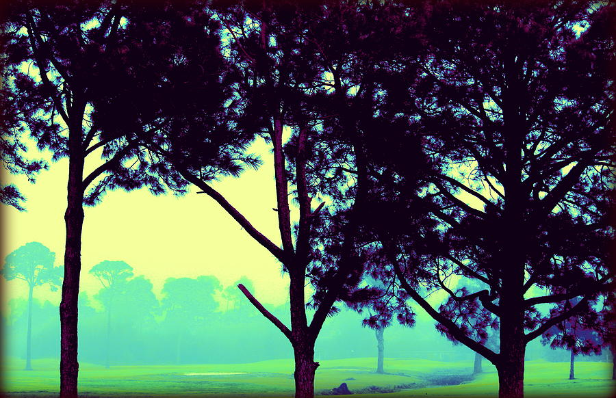 Trees In My Dreams Photograph
