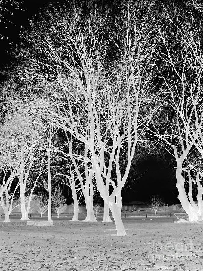 Trees In Park 2 Mixed Media