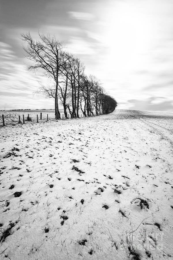 Trees In Snow Scotland II Photograph