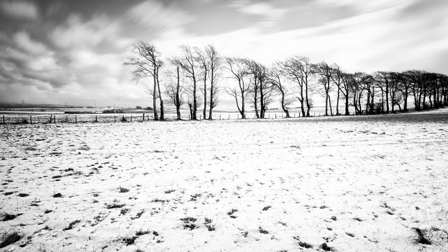Trees In Snow Scotland Iv Photograph