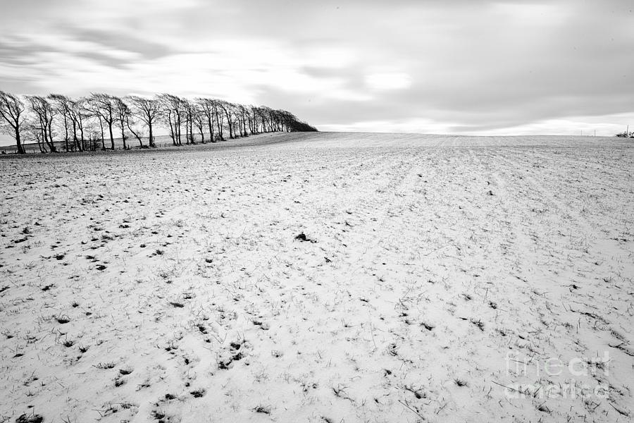 Snow Photograph - Trees In Snow Scotland by John Farnan