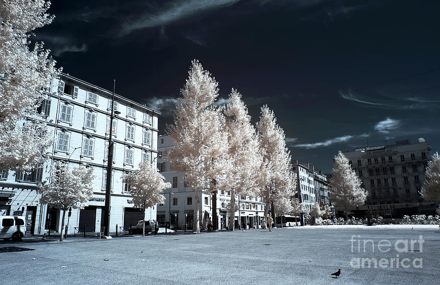 Trees In The City Photograph