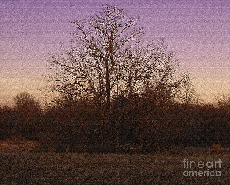 Trees In The Setting Sun Photograph