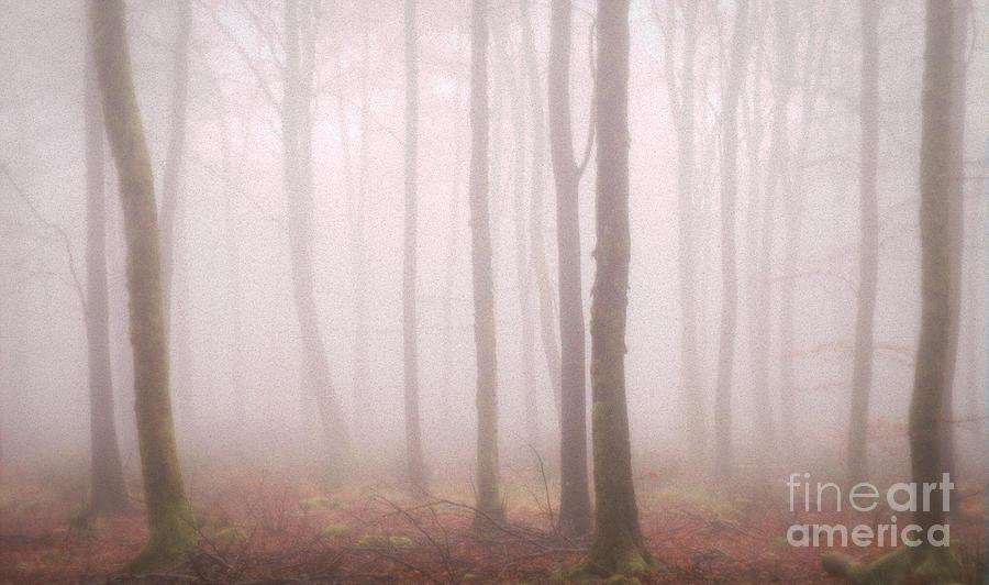 Trees Mist 2 Photograph