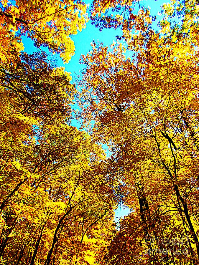 Trees Photograph - Trees Of Gold by Angela Dalporto