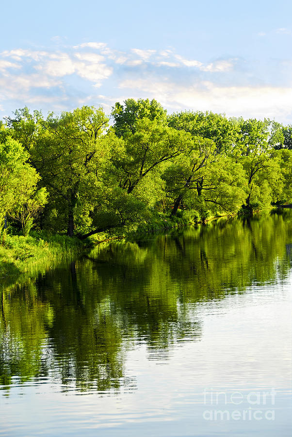 Trees Reflecting In River Photograph