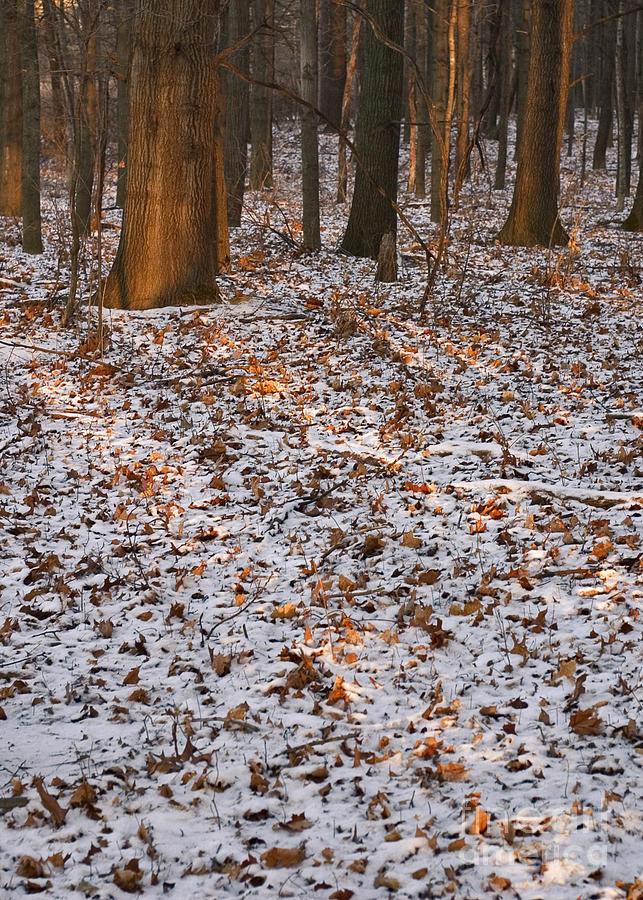 Arboretum Photograph - Trees by Steven Ralser