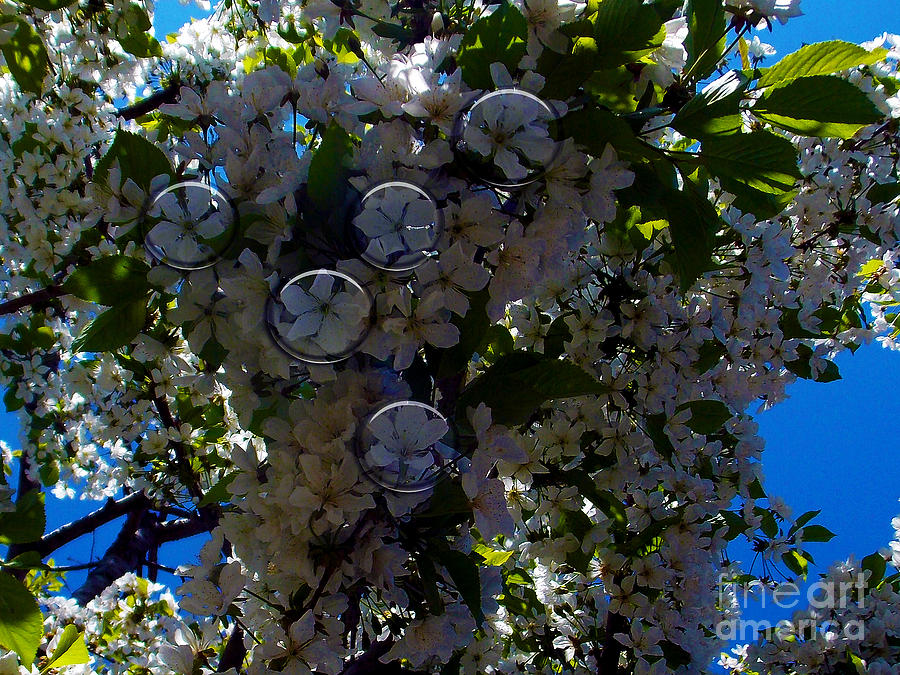 2013 Photograph - Trees With The Flowers by Elvira Ladocki