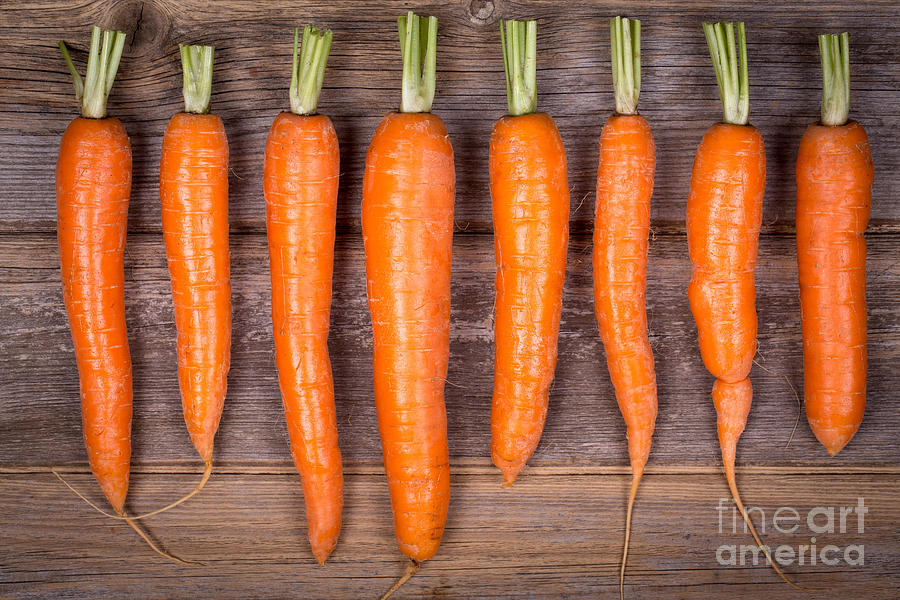 Trimmed Carrots In A Row Photograph